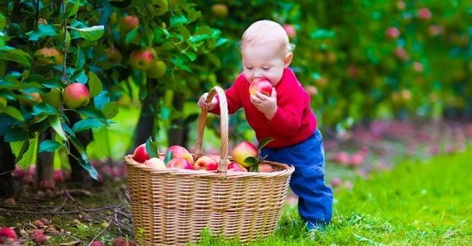 Little boy eating an apple